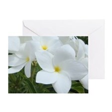 Aruba White Flowers-10 Greeting Card