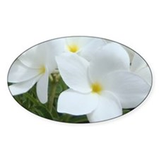 Aruba White Flowers-10 Decal