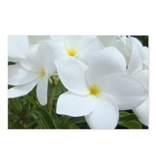 Aruba White Flowers-10 Postcards (Package of 8)