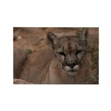 (18) Mountain Lion 1 Rectangle Magnet