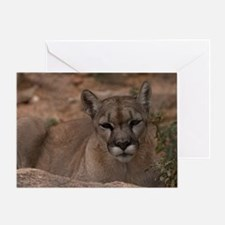 (6) Mountain Lion 1 Greeting Card