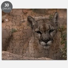 (6) Mountain Lion 1 Puzzle