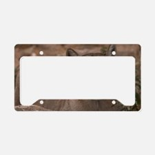 (6) Mountain Lion 1 License Plate Holder