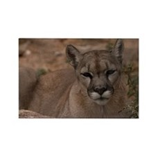 (6) Mountain Lion 1 Rectangle Magnet