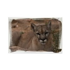 (16) Mountain Lion 1 Rectangle Magnet