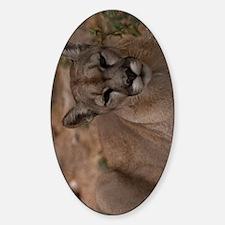(10p) Mountain Lion 1 Decal