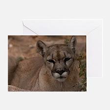 (14) Mountain Lion 1 Greeting Card