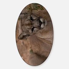 (11p) Mountain Lion 1 Decal