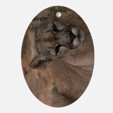 (13p) Mountain Lion 1 Oval Ornament