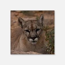 "(15s) Mountain Lion 1 Square Sticker 3"" x 3"""
