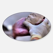 6.5X4.5-Portrait-Clay-Sculptor-Maki Decal