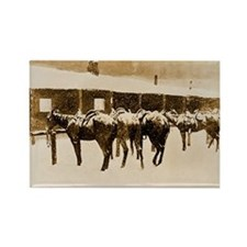 Cow Pony Pathos, 1897 Rectangle Magnet