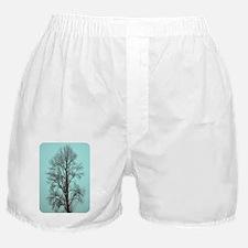 DSC_0492 5 Boxer Shorts