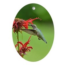 Hummingbird And Bee Balm Ornament (Oval)