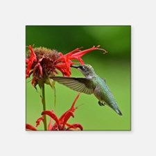 Hummingbird And Bee Balm Square Sticker 3&Quot; X