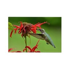 Hummingbird And Bee Balm Rectangle Magnet