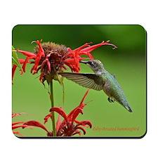 Hummingbird And Bee Balm Mousepad