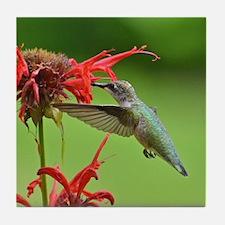 Hummingbird and bee balm Tile Coaster