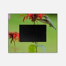 Hummingbird And Bee Balm Picture Frame