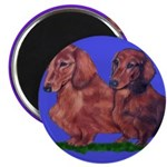 Long Haired Dachshunds 2.25