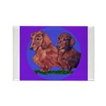 Long Haired Dachshunds Rectangle Magnet (10 pack)