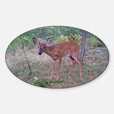 Whitetail fawn Oval Decal