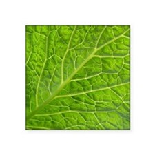 "Green leaf Square Sticker 3"" x 3"""