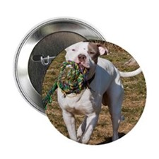 """Pit Bull 5 2.25"""" Button"""