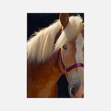 Sunlit Horse Rectangle Magnet