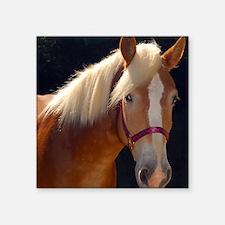 "Sunlit Horse Square Sticker 3"" x 3"""