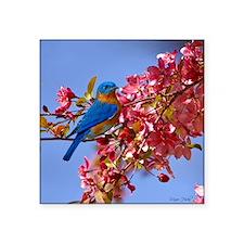 """Bluebird in Blossoms Square Sticker 3"""" x 3"""""""