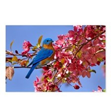 Bluebird in Blossoms Postcards (Package of 8)