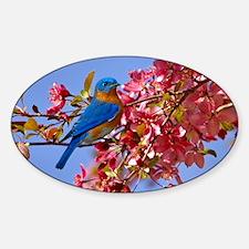 Bluebird in Blossoms Sticker (Oval)