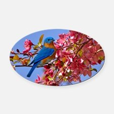 Bluebird in Blossoms Oval Car Magnet