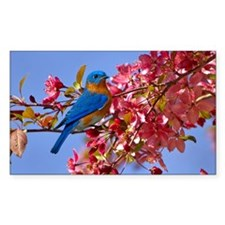 Bluebird in Blossoms Decal