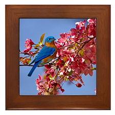 Bluebird in Blossoms Framed Tile