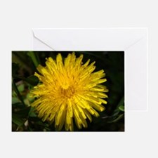 dandelion1 Greeting Card