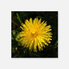 "dandelion1 Square Sticker 3"" x 3"""
