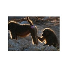 Two olive baboon (Papio anubis) g Rectangle Magnet
