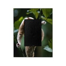 Slow loris (Nycticebus coucang) hang Picture Frame