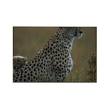 Cheetah (Acinonyx jubatus) and ch Rectangle Magnet