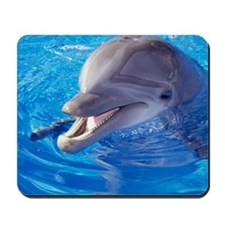Dolphin in pool, Close-up of head Mousepad