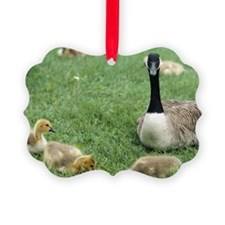 Canadian goose with goslings, Min Ornament