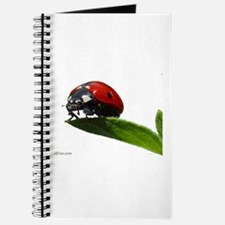 The LadyBug Journal