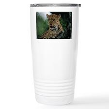 Leopard (Panthera pardus) resti Travel Mug