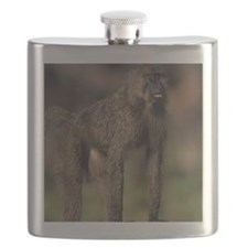 Olive baboon (Papio anubis), on savannah, Ke Flask