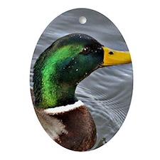 Male Mallard Oval Ornament