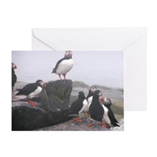 puffin conference Greeting Card