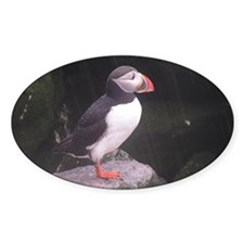 puffin on the rocks Decal