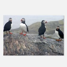 puffins on rock Postcards (Package of 8)
